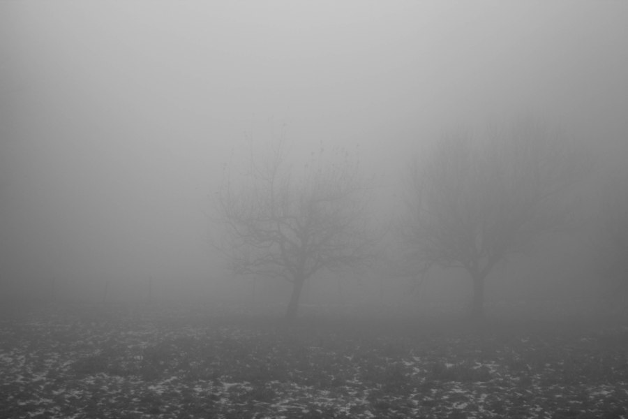 fogbw-2