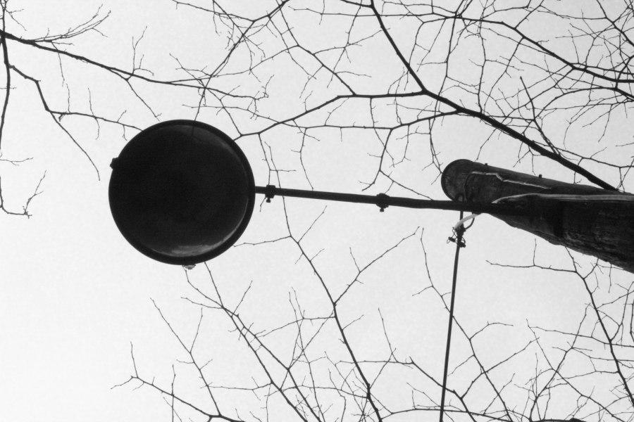 branch in bulb (1 of 1)