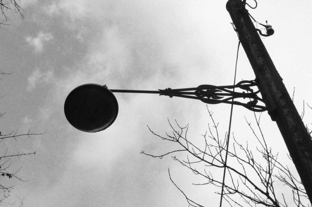 branch in bulb (2 of 1)