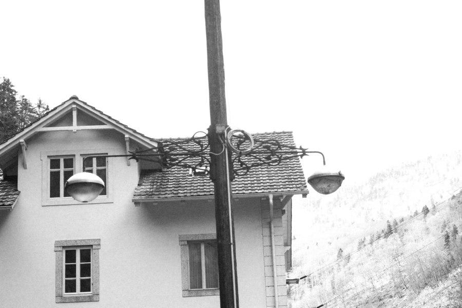 branch in bulb (4 of 1)