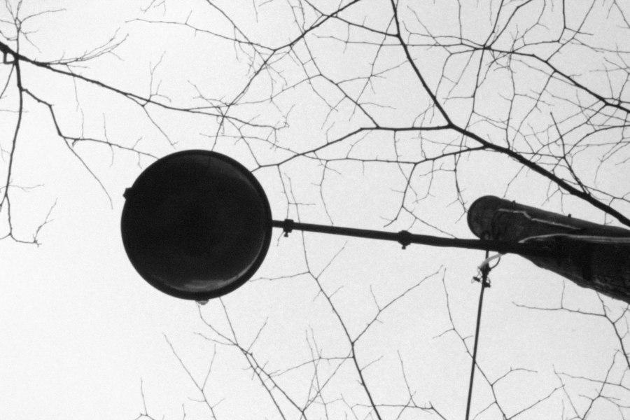 branch in bulb (6 of 1)