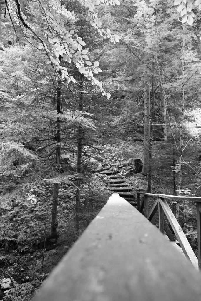 The gorges of Poëta-Raisse wooden bridge (2 of 1)