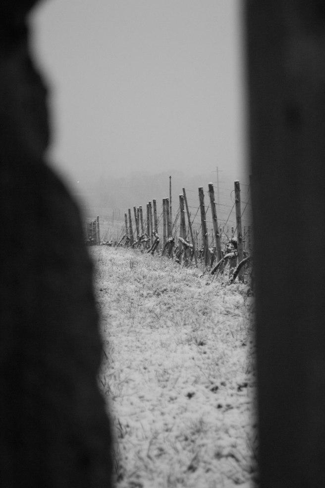snow on vines door (1 of 1)