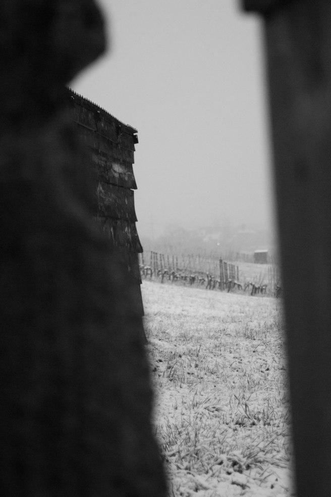 snow on vines door (2 of 1)