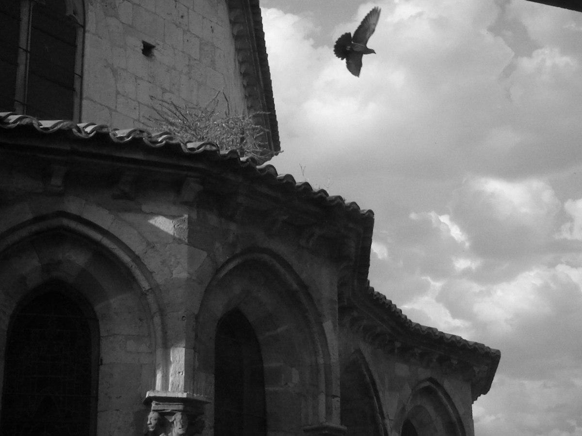 una paloma
