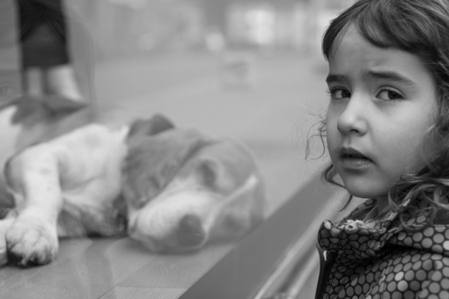 amaya looking at dog in storefront-3